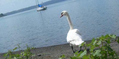 Il fascino della vacanza sul lago